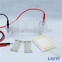 六一DYCP-31CN型琼脂糖水平电泳仪广州代理