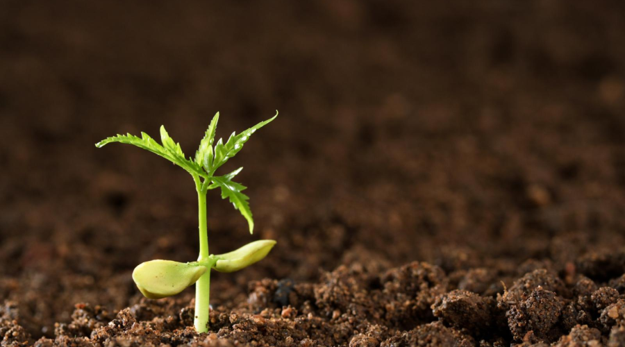 """新模型精准预测土壤""""碳排放"""" 提升环境预测准确性"""