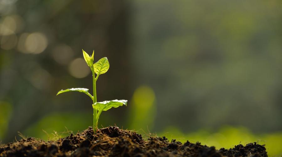 《場地環境監測技術導則》等5項標準意見稿發布